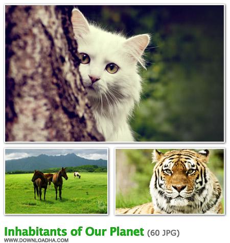 Inhabitants مجموعه 60 والپیپر دیدنی با موضوع حیوانات Inhabitants of Our Planet