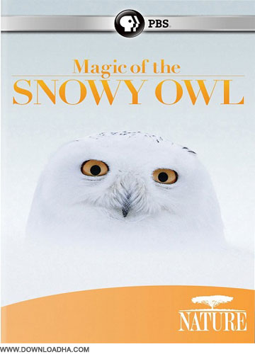 Magic Of The Snowy Owl دانلود مستند جغد برفی Nature Magic of the Snowy Owl