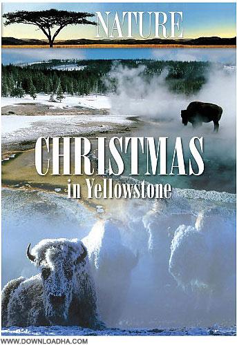 Yellowstone دانلود مستند کریسمس در یلواستون Christmas in Yellowston
