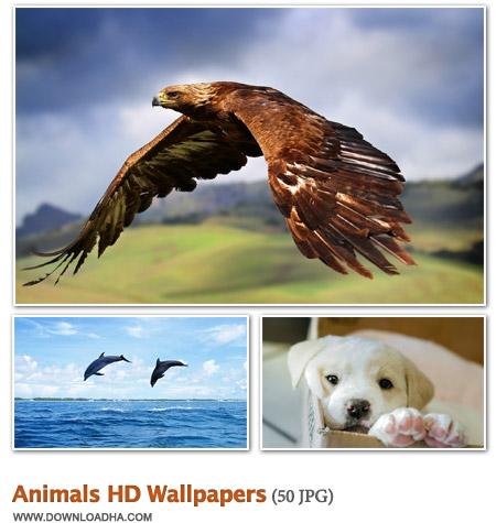 Animalsl 50 والپیپر زیبا با موضوع حیوانات Animals HD Wallpapers