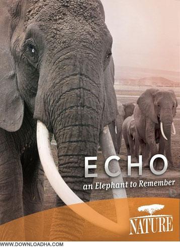 Elephant دانلود مستند به یاد اکو Echo: An Elephant to Remember