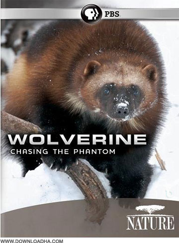 Wolverine مستند درنده ترین پستاندار زمین Wolverine Chasing the Phantom
