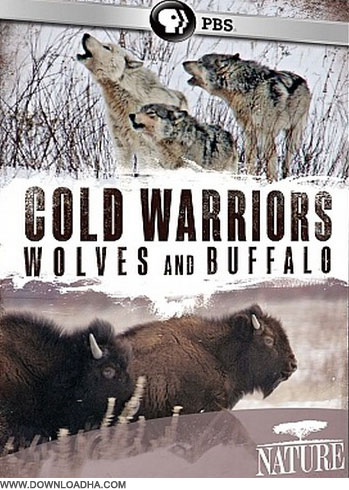 wolf دانلود مستند جنگجویان سرما Cold Warriors: Wolves and Buffalo