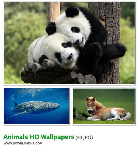 WallAN 50 والپیپر زیبا با موضوع حیوانات Animals HD Wallpapers